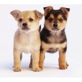 Check up Cucciolo di Cane con Visita Specialistica Veterinaria , Analisi delle feci e Sverminazione