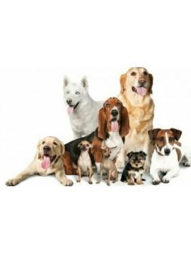 Check up Cane con Visita Specialistica Veterinaria ,Analisi delle feci e Vaccino Pentavalente